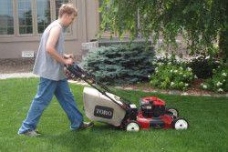 Gardening Services Whetstone