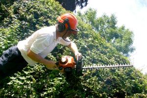Hedge Trimming Whetstone